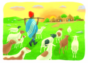 A boy is taking his sheep over over a green African field.